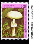 Small photo of GUINEA - CIRCA 1996: A stamp printed in Guinea shows a Destroying Angel mushroom, Amanita virosa, Amanita ocreata, or Amanita verna. One of the most poisonous mushrooms known, circa 1996.