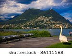 Swan near the Lugano lake,  Switzerland - stock photo