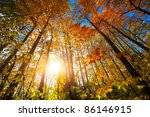 Autumn Forest With Sunlight An...
