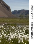 Small photo of Arctic tundra plain with cottongrass, Greenland