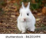 Stock photo baby white rabbit in grass cute rabbit 86201494
