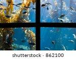 aquarium | Shutterstock . vector #862100