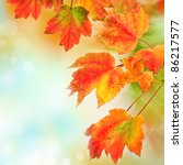 colorful fall autumn leaves on... | Shutterstock . vector #86217577