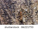 red ant in green nature - stock photo
