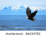 American Bald Eagle Flies Abov...