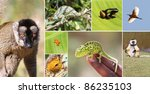 wildlife animals of madagascar... | Shutterstock . vector #86235103