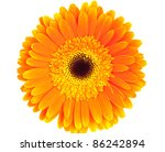 Orange Gerbera On White...