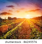 beautiful vineyard landscape...
