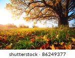 Big Autumn Oak And Green Grass...
