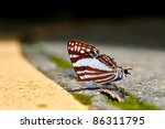 butterfly  white punch  | Shutterstock . vector #86311795