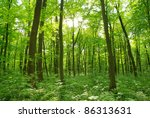 forest landscape in the morning   Shutterstock . vector #86313631