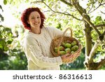 Woman Picking Apples In Garden