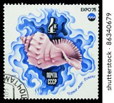 "Small photo of USSR - CIRCA 1975: A Stamp printed by RUSSIA shows image Rapana bezoar Shell, Black Sea from the series ""Oceanexpo 75 Emblem"", circa 1975"