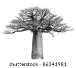 black and white isolated baobab ... | Shutterstock . vector #86341981