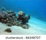 coral reef with exotic fishes | Shutterstock . vector #86348707