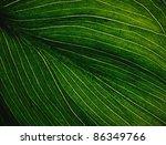 veins of a flowering dogwood... | Shutterstock . vector #86349766