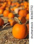 A Single Pumpkin Sits On Hey I...