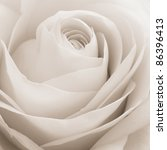 Stock photo close up of white rose petals 86396413