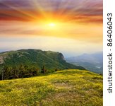 Scene with yellow flower's  field in mountains - stock photo