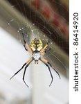 Garden Spider  Also Called Orb...
