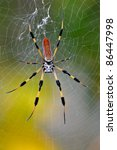 Colorful Banana Spider In Web...