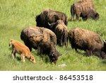 american bison  bison bison ...   Shutterstock . vector #86453518