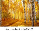 Vivid Colors Of Autumn Birch...