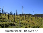 Small photo of Trees in the Polish mountains destroyed by acid rain.