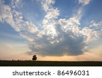 solitary oak tree in the sunset | Shutterstock . vector #86496031