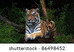 tiger | Shutterstock . vector #86498452