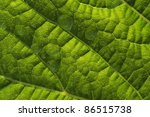 fresh green leaf close up | Shutterstock . vector #86515738