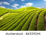 Green Tea Farm With Blue Sky...