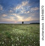 solitary oak tree in the sunset   Shutterstock . vector #86548870