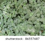 natural full frame background showing lots of patterned leaves - stock photo