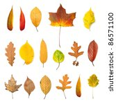 autumn leaves | Shutterstock . vector #86571100