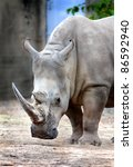 A portrait of a rhinoceros - stock photo