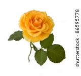 Beautiful Yellow Rose With...