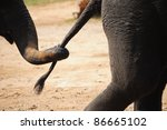 Relationship Of Elephant