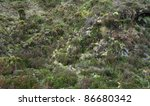 detail of a shrubby overgrown hill at Sao Miguel Island - stock photo