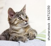 Stock photo little kitten 86712250
