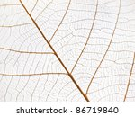 skeleton leaf abstract... | Shutterstock . vector #86719840