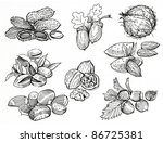 nuts   Shutterstock . vector #86725381