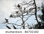 Cormorants Roosting On A Branc...