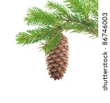 Spruce Branch With Cone On A...