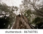 Forest canopy - stock photo