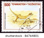 Small photo of TAJIKISTAN - CIRCA 1994: A stamp printed in Tajikistan shows a Even-fingered Gecko Lizard, Alsophylax loricatus on rocky ground, circa 1994.