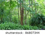 forest in chiang mai  thailand   Shutterstock . vector #86807344