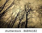 Leafless Trees With Creepy...