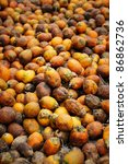 Betel Nut or Areca Nut background. - stock photo