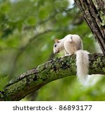Unique White Squirrel Sits In...